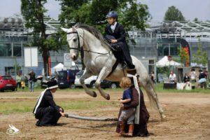 IMG_7514 cavallo